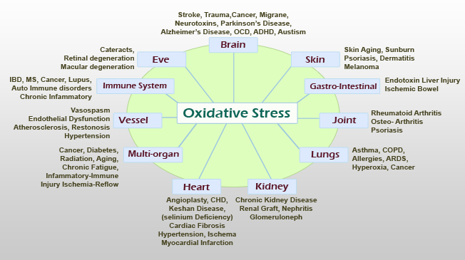 SOD Fights Against Oxidative Stress